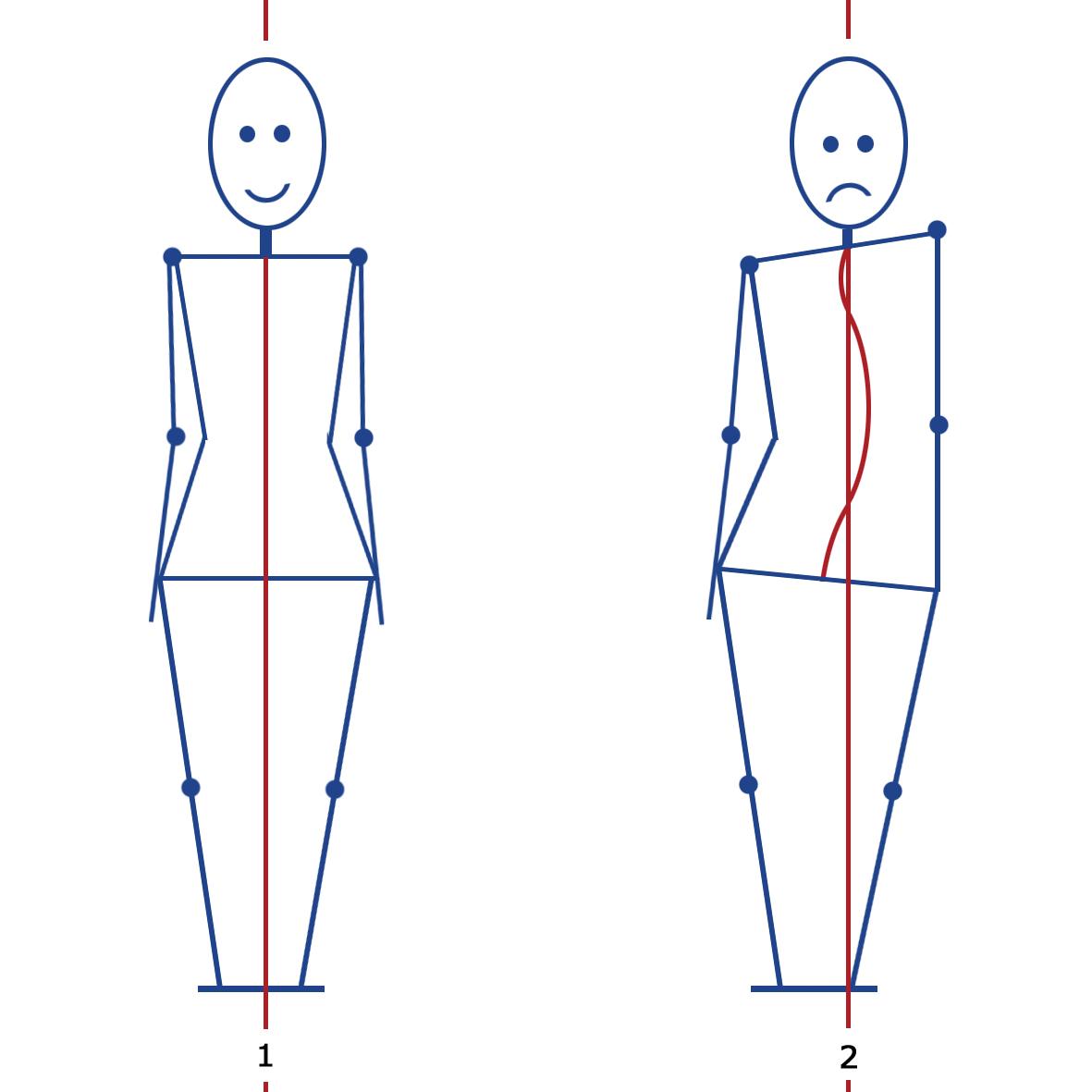 Muskelaufbau| Beweglichkeit | Ausdauer | Muskelanatomie ...